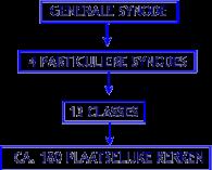 structuur CGK